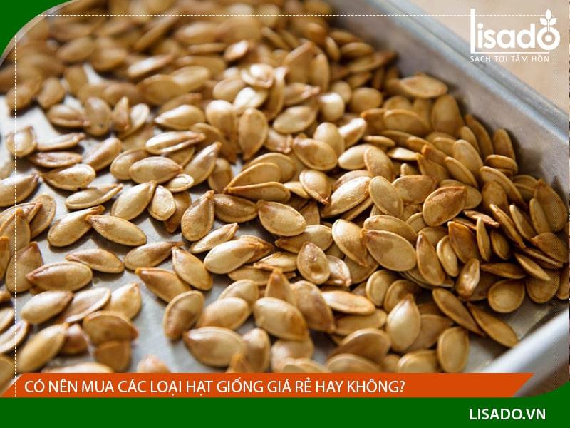 Có nên mua các loại hạt giống giá rẻ hay không?