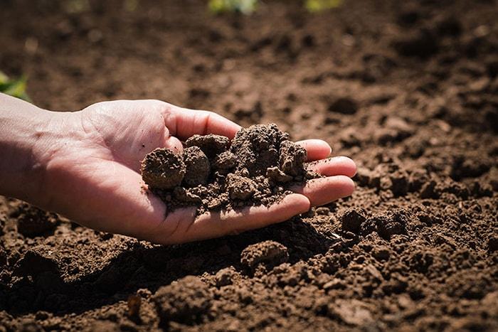 Chuẩn bị đất và nước cho việc gieo trồng hạt giống rau ăn lá