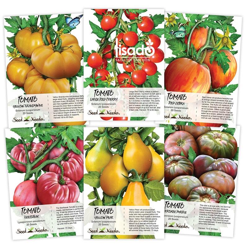 Hạt giống cà chua phù hợp với khí hậu mùa đông ở Việt Nam