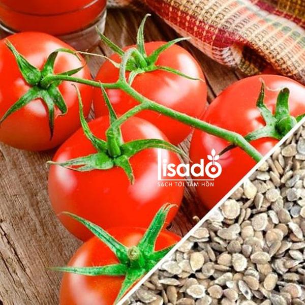 Hạt giống cà chua được trồng nhiều vào mùa đông