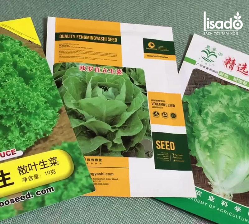 Hạt giống rau cải phù hợp với khí hậu mùa đông ở Việt Nam
