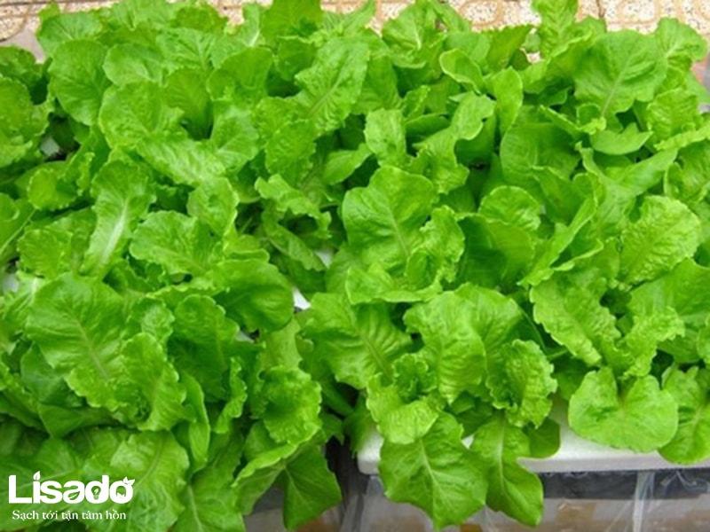 Hạt giống rau hữu cơ là gì? Ưu điểm của hạt giống rau hữu cơ