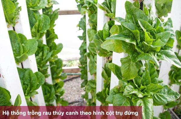 Hệ thống trồng rau thủy canh theo hình cột trụ đứng