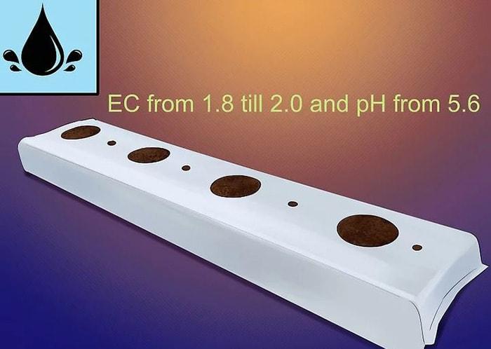 Tiến hành tưới ở độ dẫn điện từ 1.8 đến 2.0 và nồng độ pH từ 5.6