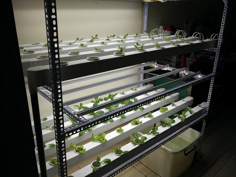 Thủy canh đèn led - giải pháp trồng rau trong nhà chung cư