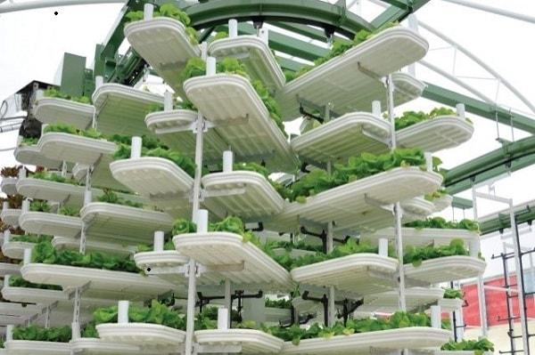 Hệ thống thủy canh được tự động hóa