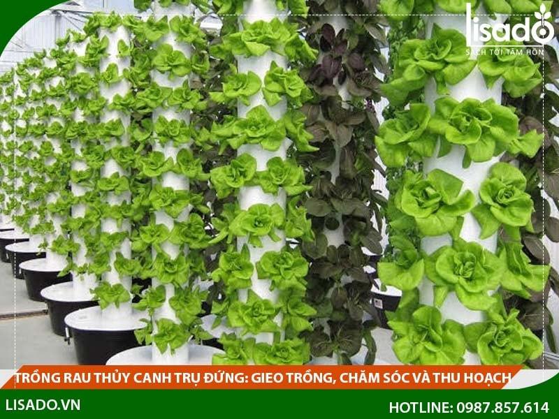 Trồng rau thủy canh trụ đứng: gieo trồng, chăm sóc và thu hoạch