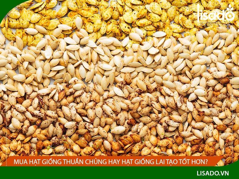 Mua hạt giống thuần chủng hay hạt giống lai tạo tốt hơn?
