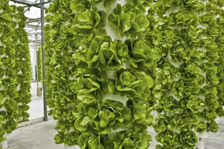 Phương pháp trồng cây khí canh trụ đứng