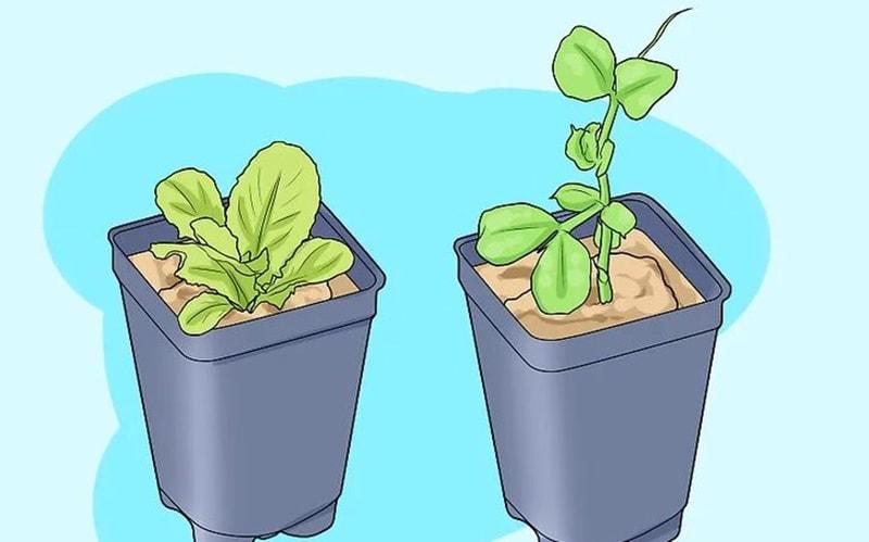Lựa chọn cây trồng phù hợp