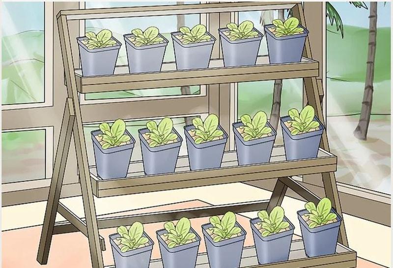 Chăm sóc cây trồng