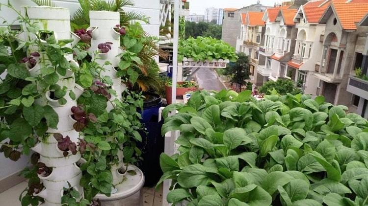 Mô hình trồng rau thủy canh trụ đứng có thể áp dụng cho mọi nhà