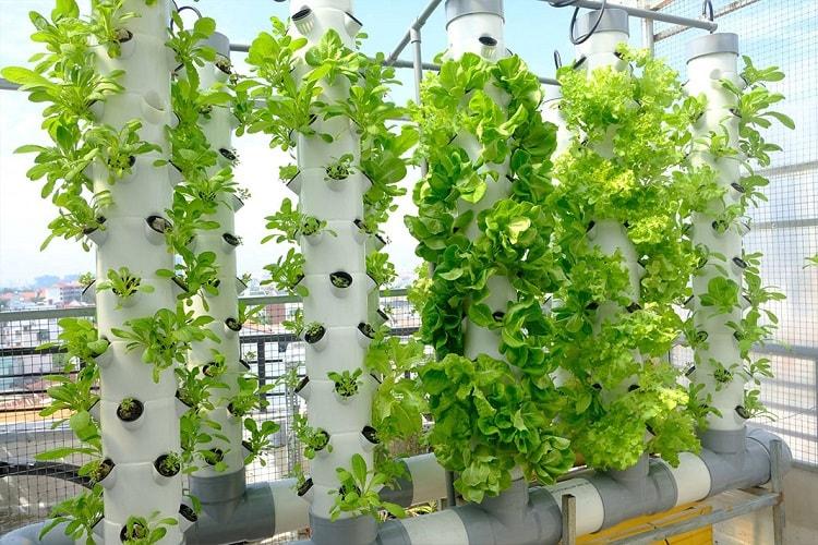 Mô hình trồng rau thủy canh trụ đứng