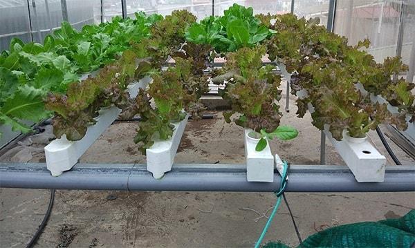 Dàn trồng cây thủy canh mini