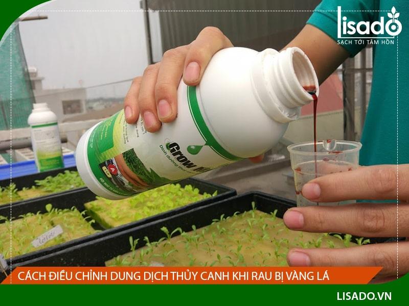 Cách điều chỉnh dung dịch thủy canh khi rau bị vàng lá