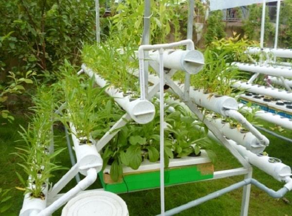 Hệ thống thủy canh cần bổ sung chất dinh dưỡng cần thiết