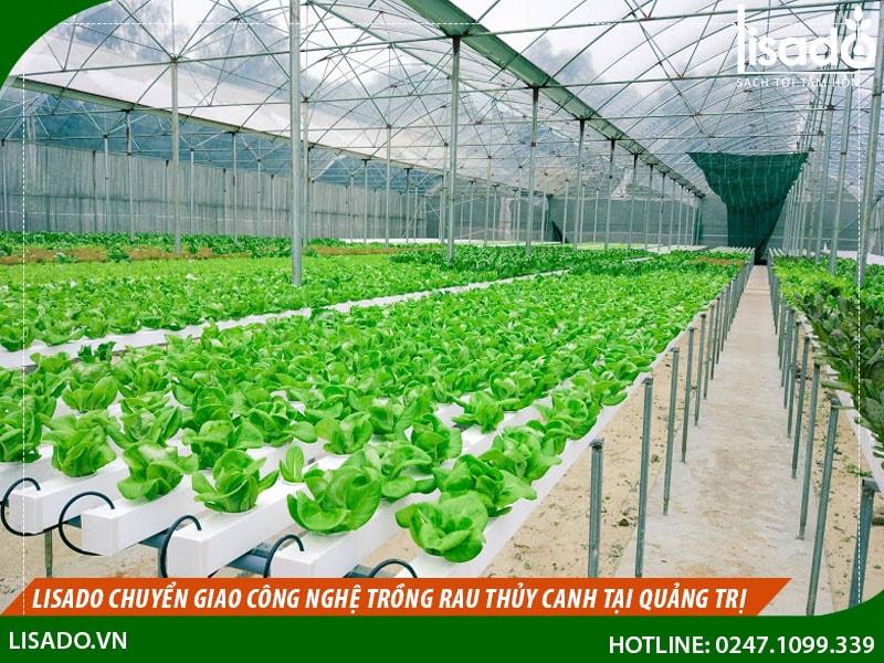 Lisado chuyển giao công nghệ trồng rau thủy canh tại Quảng Trị