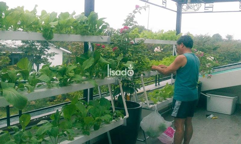 Vì sao nên chọn phương pháp thủy canh hồi lưu khi trồng rau tại ban công nhà phố, nhà chung cư?