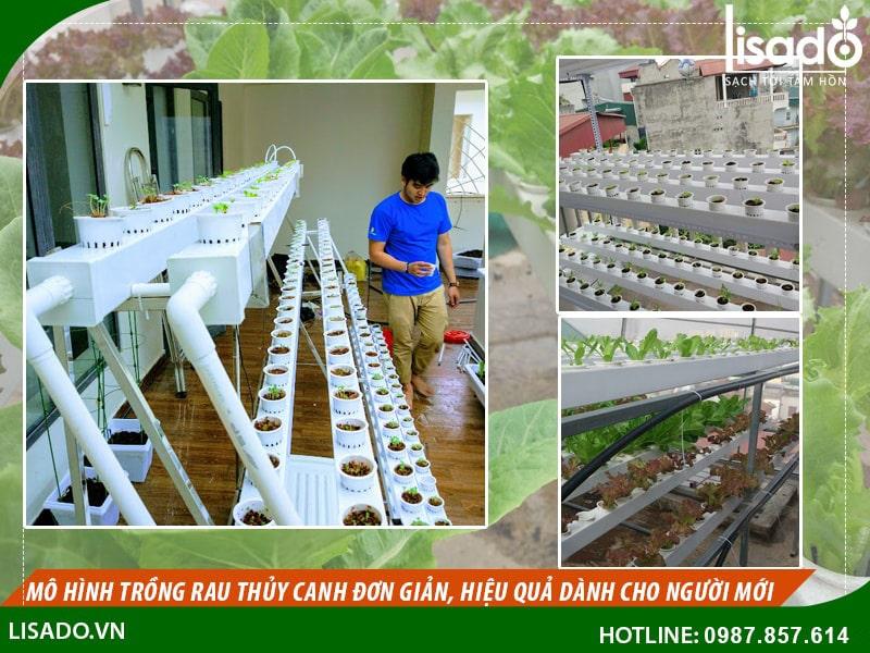Cách trồng rau thuỷ canh đơn giản, hiệu quả nhất cho người mới