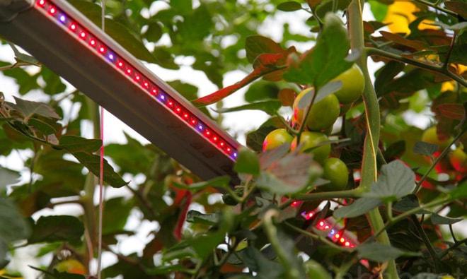 Sử dụng đèn Led trong trồng cây