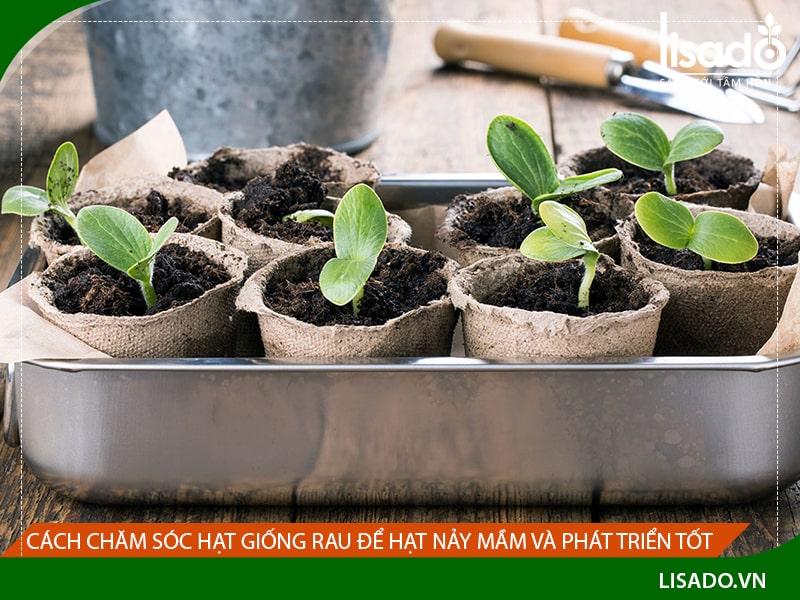 Cách chăm sóc hạt giống rau để hạt nảy mầm và phát triển tốt