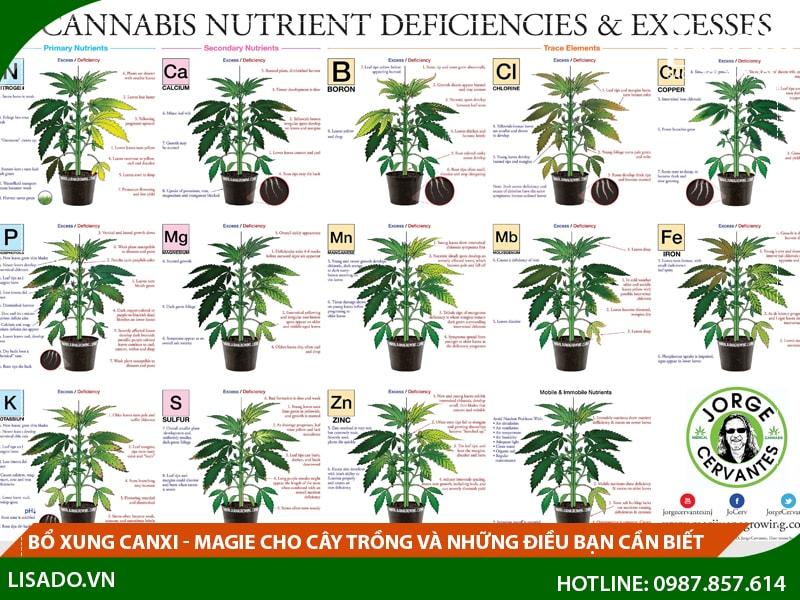 Bổ xung Canxi - Magie cho cây trồng và những điều bạn cần biết