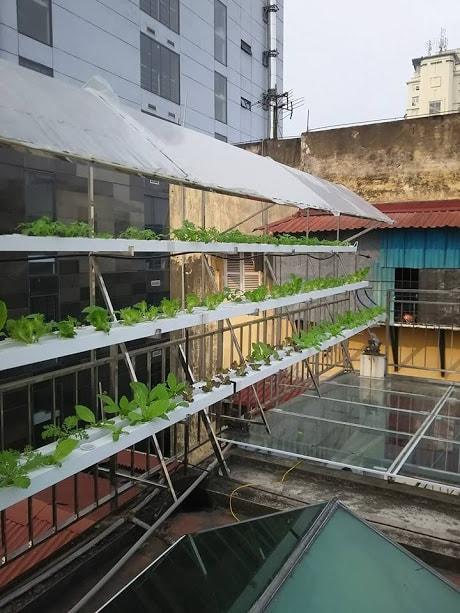 Hệ thống trồng rau thủy canh sau khi hoàn chỉnh