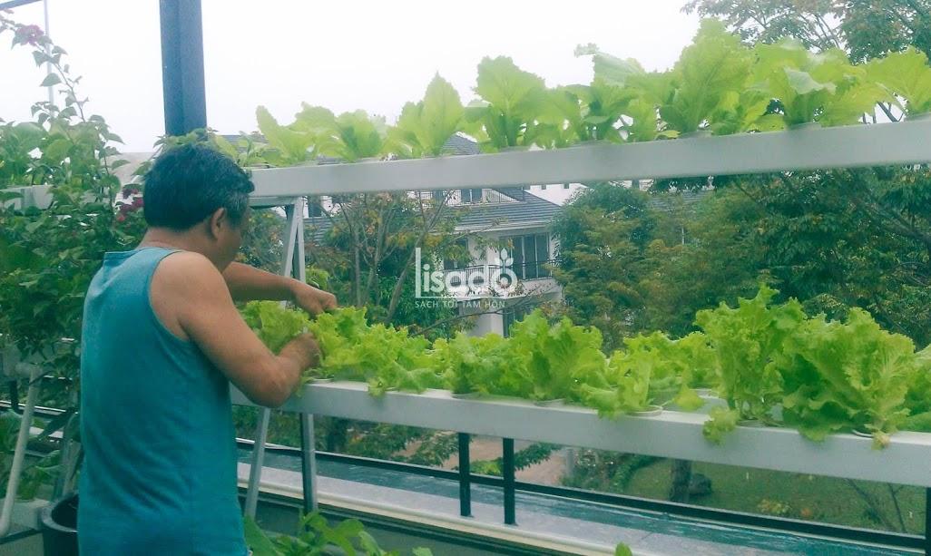 Mô hình trồng rau thủy canh hồi lưu do Lisado triển khai