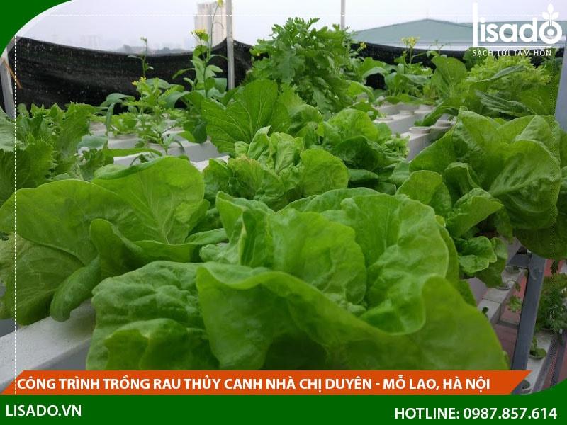 Công trình trồng rau thủy canh nhà chị Duyên - Mỗ Lao, Hà Nội