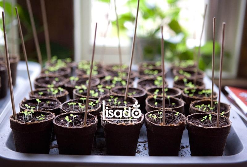 Gieo hạt thành cây mới đưa ra ánh sáng