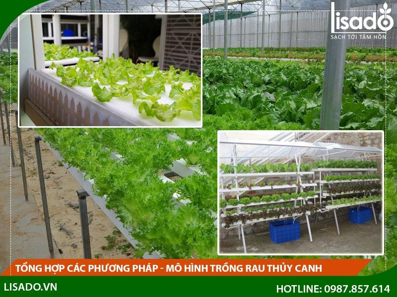 Tổng hợp các phương pháp - mô hình trồng rau thủy canh