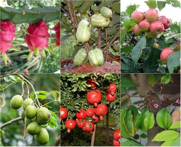 Các loại cây ăn nhỏ thường phát triển tốt trong hệ thống thủy canh