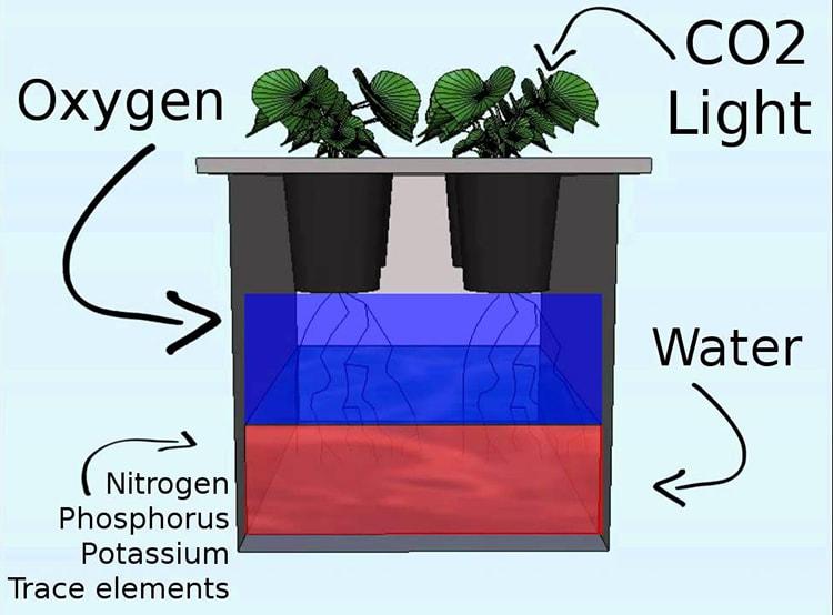Quá trình trao đổi Oxy trong thủy canh