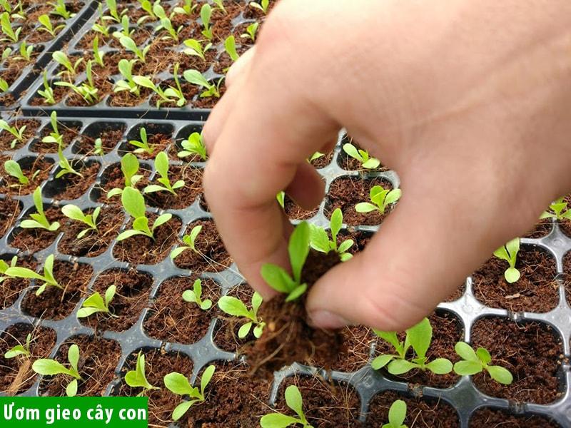 Ươm gieo cây con