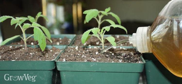 Cây được trồng bằng hỗn hợp dung dịch tự pha chế