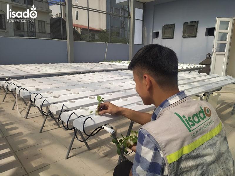Giàn trồng rau thủy canh Lisado