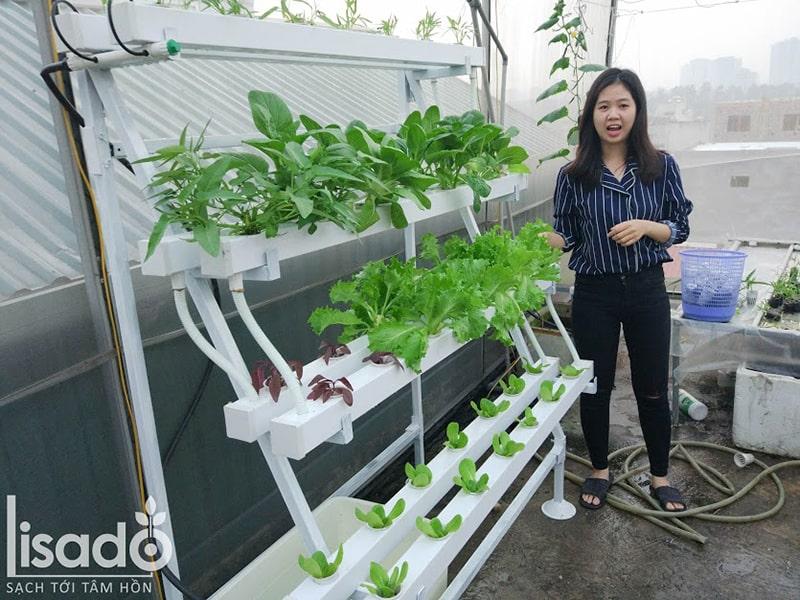 Hướng dẫn cách lắp và tự trồng giàn rau thủy canh bán chữ A tại nhà