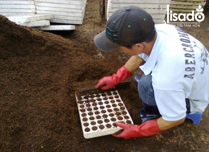 Trộn hỗn hợp làm thành giá thể trồng dưa lưới