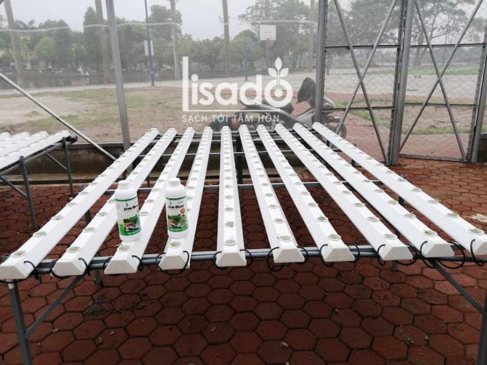 Dự án nhà lưới trồng rau thủy canh NFT Cầu Đuống - Hà Nội