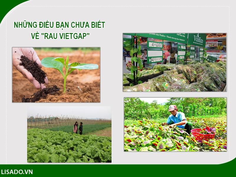 """Những điều bạn chưa biết về """"rau VietGap"""""""