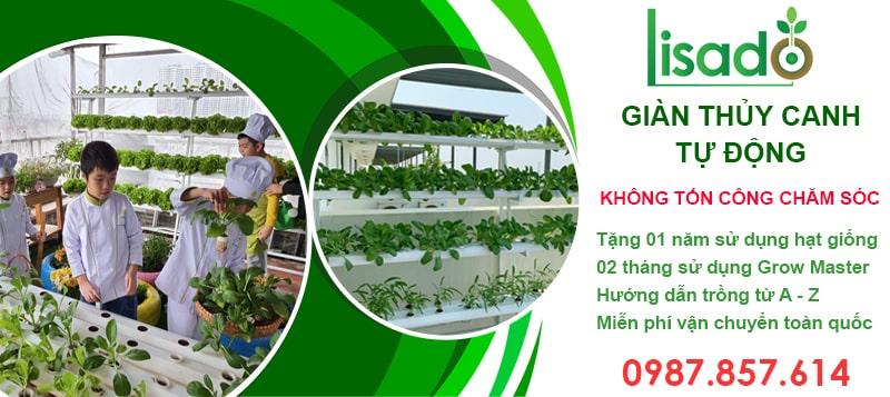Giàn trồng rau thủy canh tự động Lisado