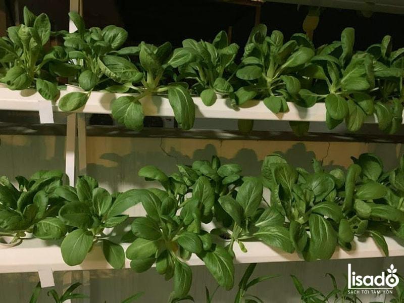 Dự án vườn rau thủy canh nhà cô Thu – Vinhomes Thăng Long – Hà Nội