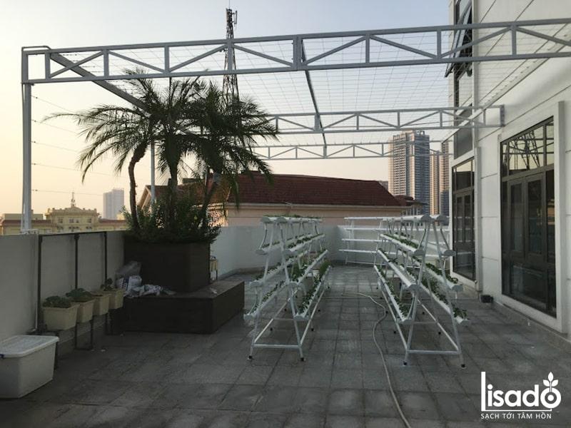 Vườn rau thủy canh trên sân thượng tại công ty Tân Nhất Hương