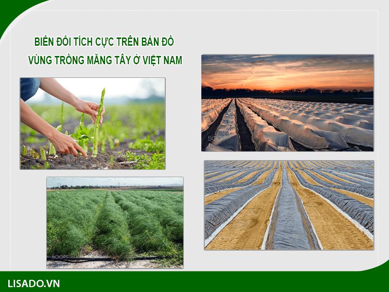 Biến đổi tích cực trên bản đồ vùng trồng măng tây ở Việt Nam