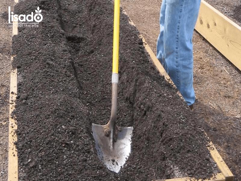 Xử lý đất thật kỹ trước khi gieo trồng măng tây