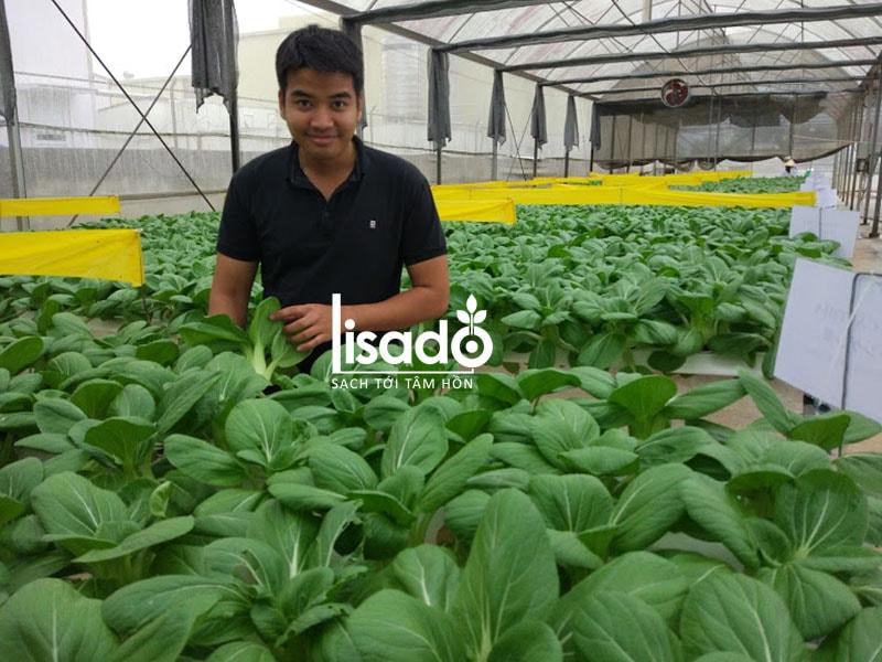 Dự án nhà màng trồng rau thủy canh 1000m2 tại Đà Lạt
