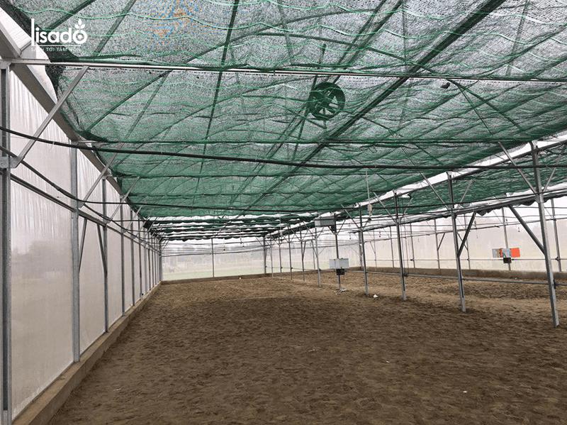 Quy cách nhà màng trồng cà chua