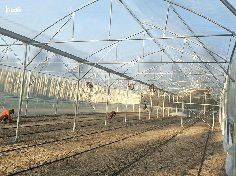 Dựng nhà màng trồng 2000m2 dưa lưới