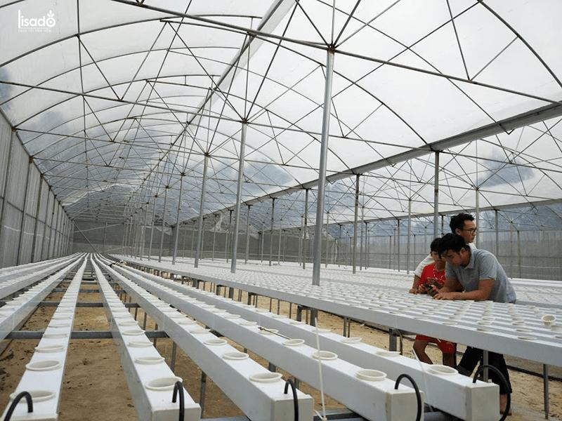 Thiết kế, thi công nhà màng trồng rau thủy canh