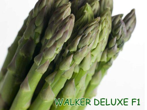 Hạt giống măng tây Walker Deluxe F1 nhập khẩu Mỹ chính hãng